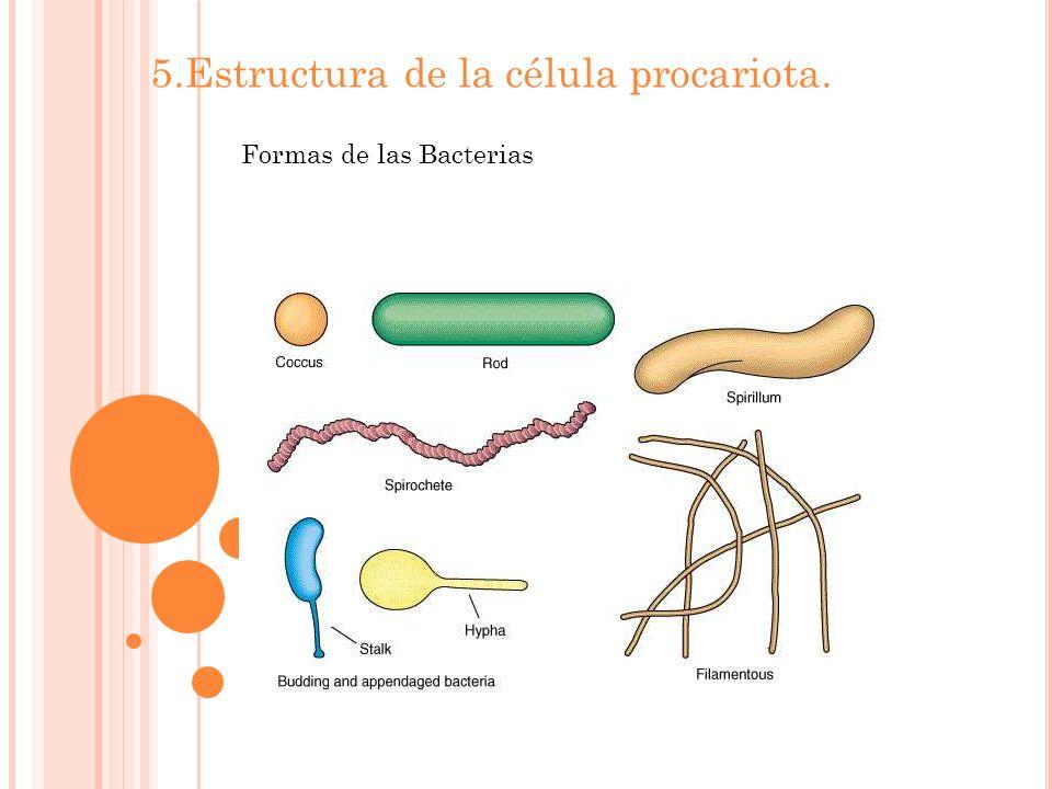 5.Estructura de la célula procariota. Formas de las Bacterias