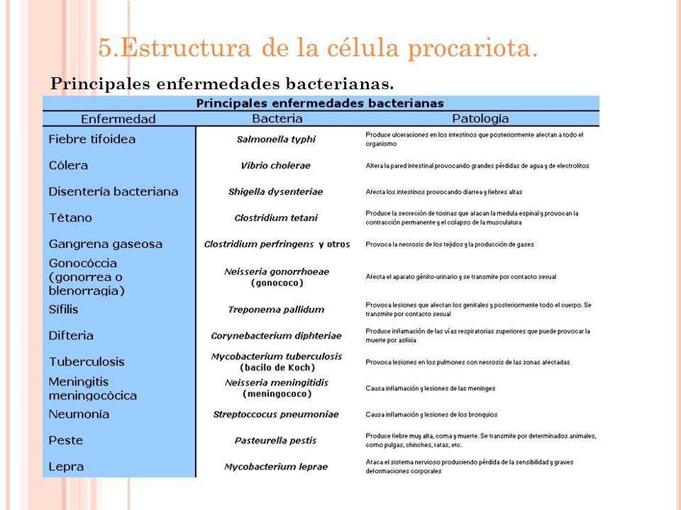 5.Estructura de la célula procariota. Principales enfermedades bacterianas.