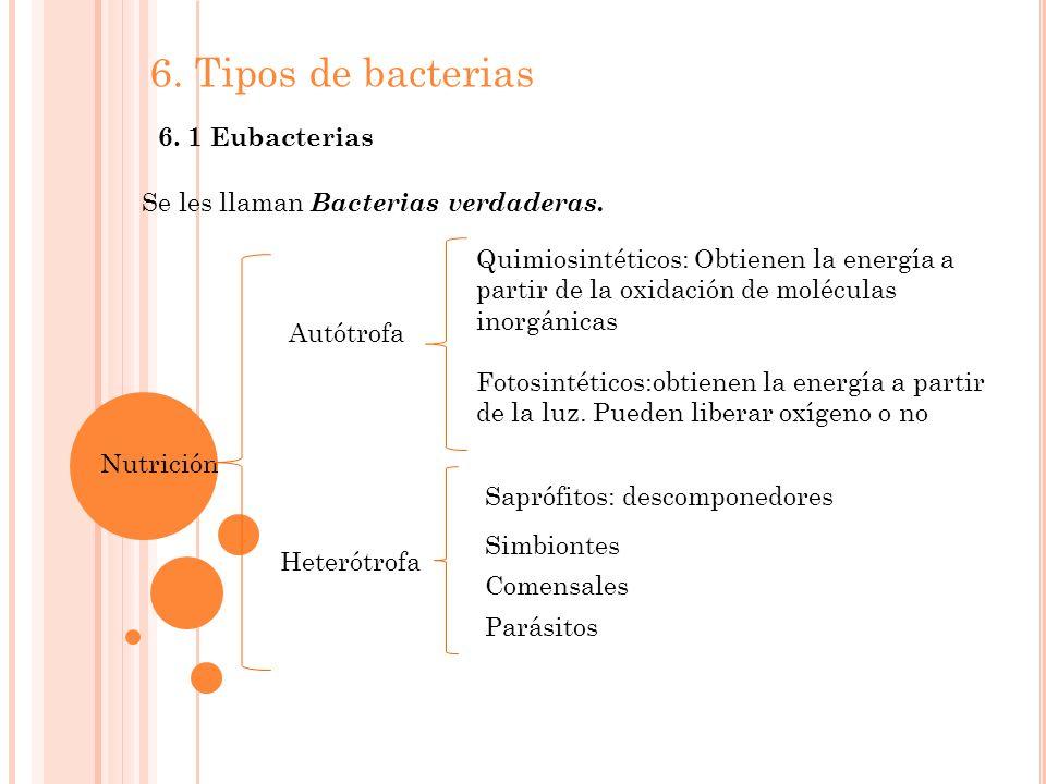 6.Tipos de bacterias 6. 1 Eubacterias Se les llaman Bacterias verdaderas.