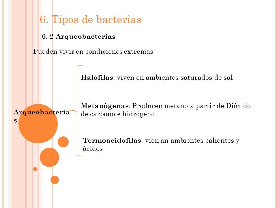 6.Tipos de bacterias 6.
