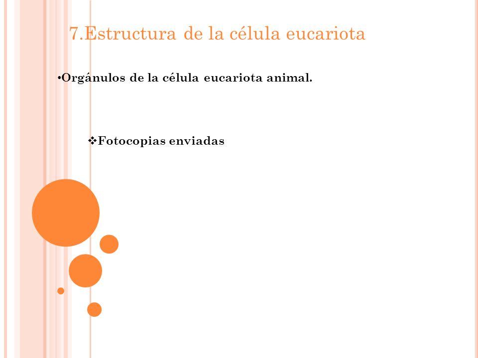 7.Estructura de la célula eucariota Orgánulos de la célula eucariota animal. Fotocopias enviadas