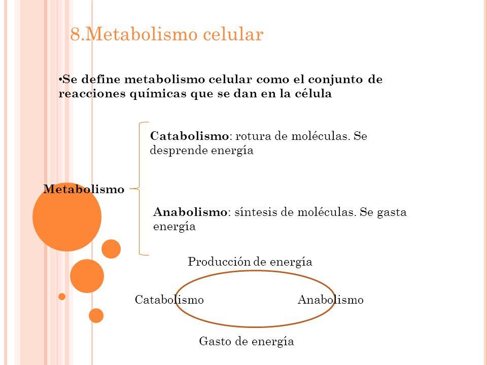 8.Metabolismo celular Se define metabolismo celular como el conjunto de reacciones químicas que se dan en la célula Metabolismo Catabolismo : rotura de moléculas.