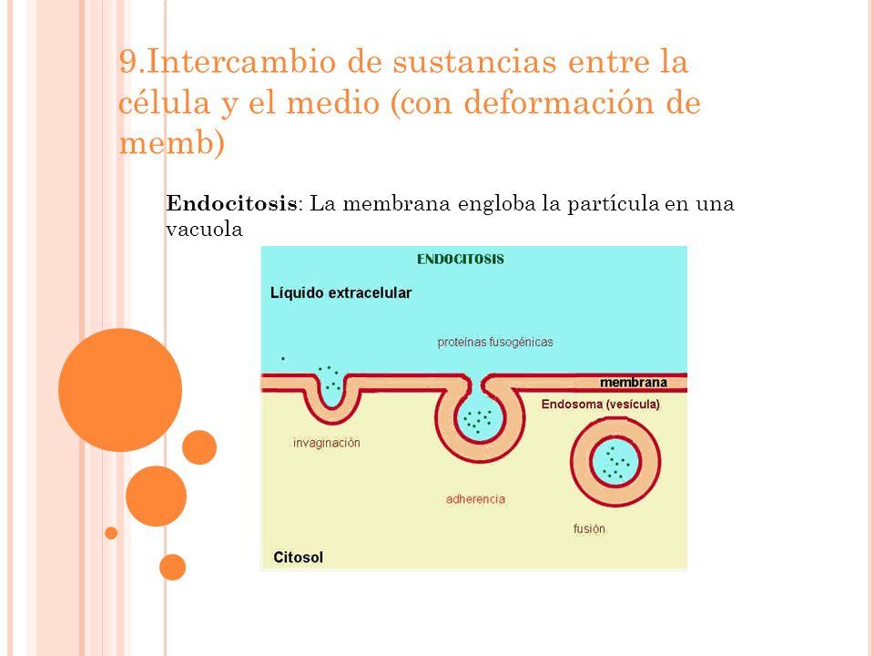 9.Intercambio de sustancias entre la célula y el medio (con deformación de memb) Endocitosis : La membrana engloba la partícula en una vacuola