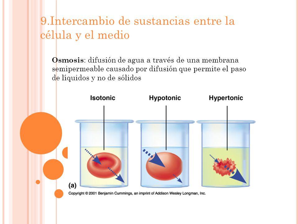 9.Intercambio de sustancias entre la célula y el medio Osmosis : difusión de agua a través de una membrana semipermeable causado por difusión que permite el paso de líquidos y no de sólidos