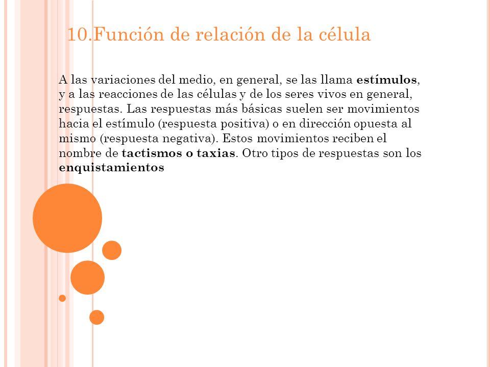 10.Función de relación de la célula A las variaciones del medio, en general, se las llama estímulos, y a las reacciones de las células y de los seres vivos en general, respuestas.