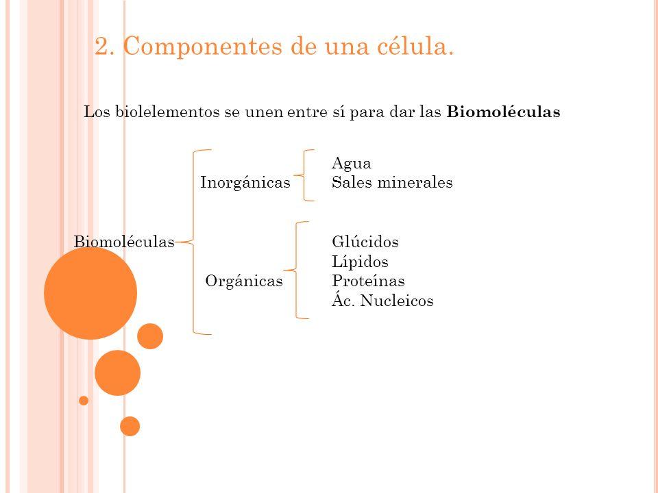 2.Componentes de una célula.