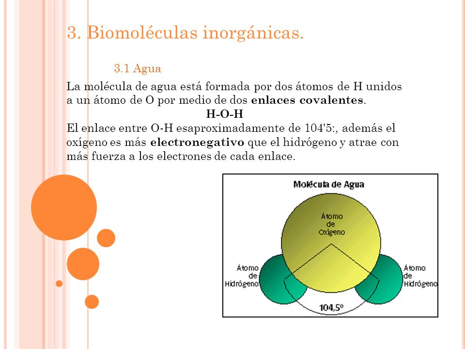 3. Biomoléculas inorgánicas. 3.1 Agua La molécula de agua está formada por dos átomos de H unidos a un átomo de O por medio de dos enlaces covalentes.