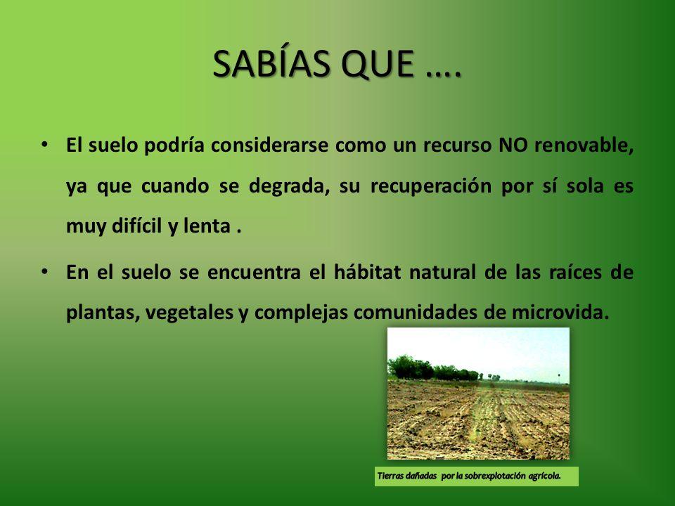 SABÍAS QUE …. El suelo podría considerarse como un recurso NO renovable, ya que cuando se degrada, su recuperación por sí sola es muy difícil y lenta.