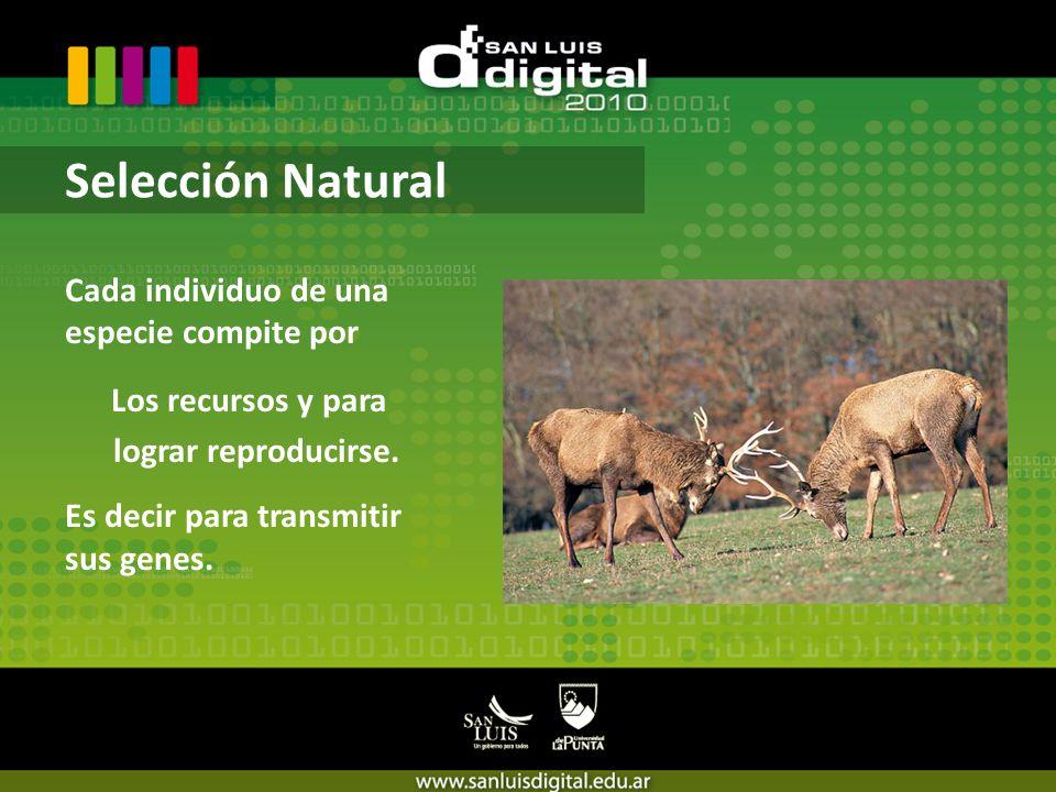 Cada individuo de una especie compite por Los recursos y para lograr reproducirse.