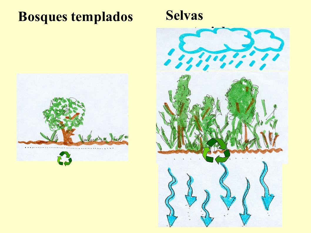 Deficiencia de nitrógeno Mal desarrollo, menor altura. Hojas pequeñas, raquíticas y amarillentas. Flores más pequeñas de lo normal. Raíces que se desa