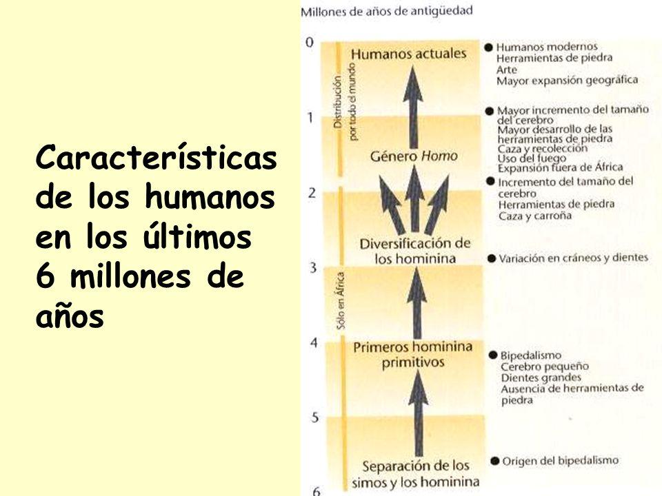 Características de los humanos en los últimos 6 millones de años