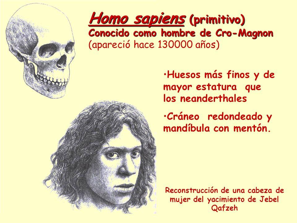 Homo sapiens (primitivo) Conocido como hombre de Cro-Magnon Homo sapiens (primitivo) Conocido como hombre de Cro-Magnon (apareció hace 130000 años) Re