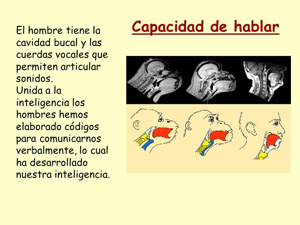 El hombre tiene la cavidad bucal y las cuerdas vocales que permiten articular sonidos. Unida a la inteligencia los hombres hemos elaborado códigos par
