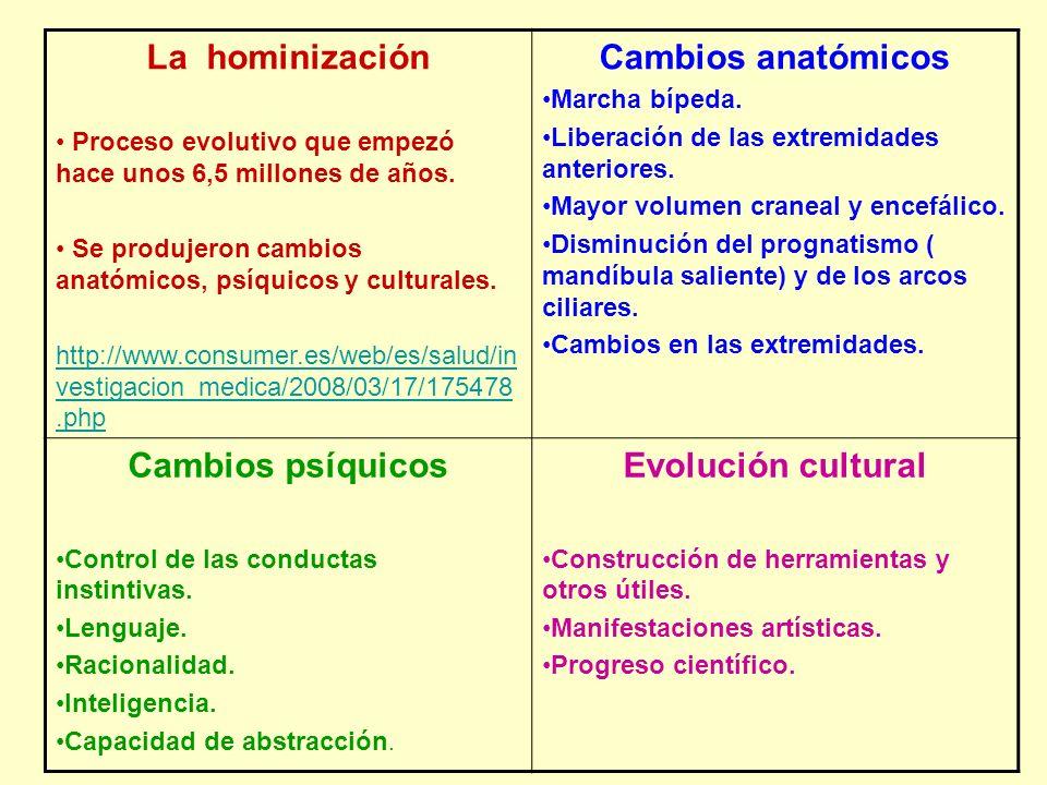 La hominización Proceso evolutivo que empezó hace unos 6,5 millones de años. Se produjeron cambios anatómicos, psíquicos y culturales. http://www.cons