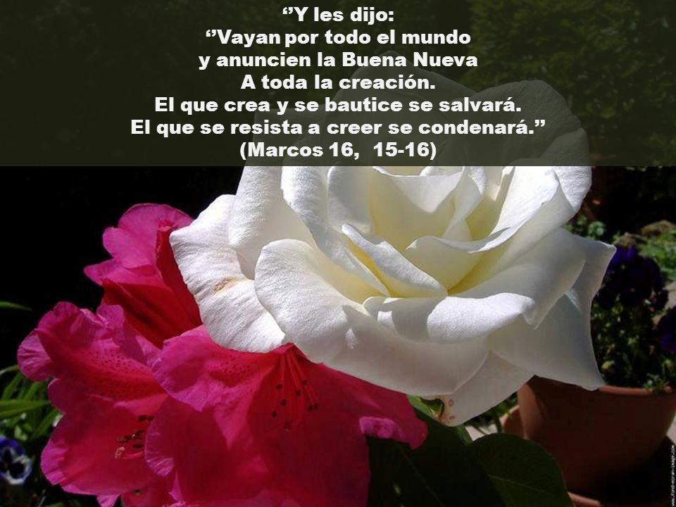 Y les dijo: Vayan por todo el mundo y anuncien la Buena Nueva A toda la creación.