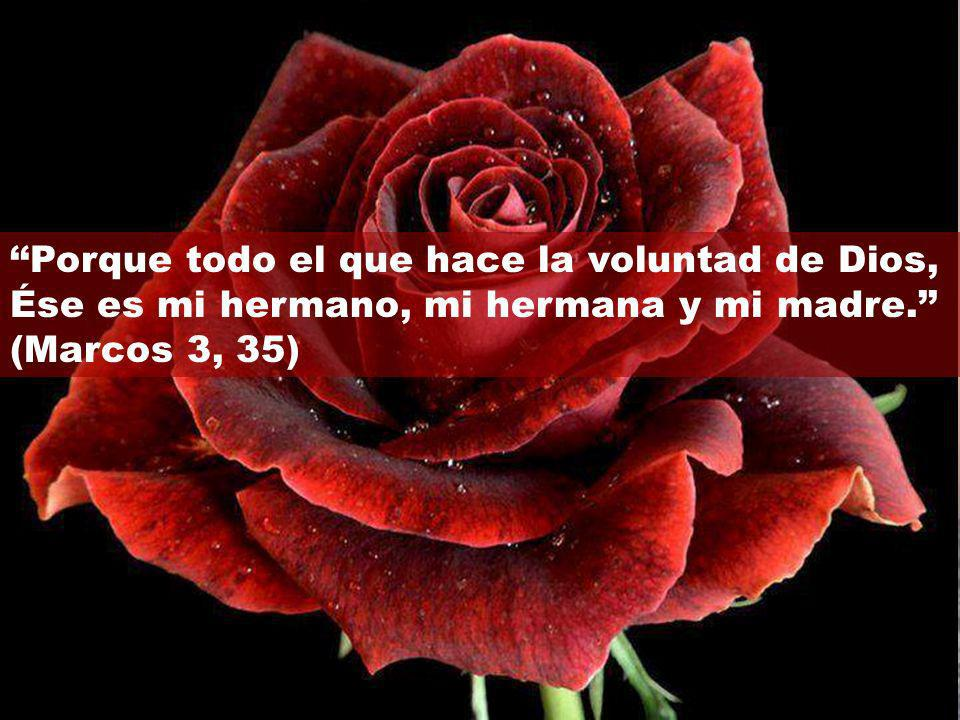 Porque todo el que hace la voluntad de Dios, Ése es mi hermano, mi hermana y mi madre. (Marcos 3, 35)