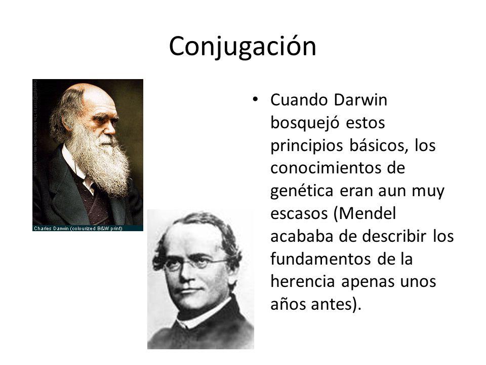 Conjugación Cuando Darwin bosquejó estos principios básicos, los conocimientos de genética eran aun muy escasos (Mendel acababa de describir los fundamentos de la herencia apenas unos años antes).
