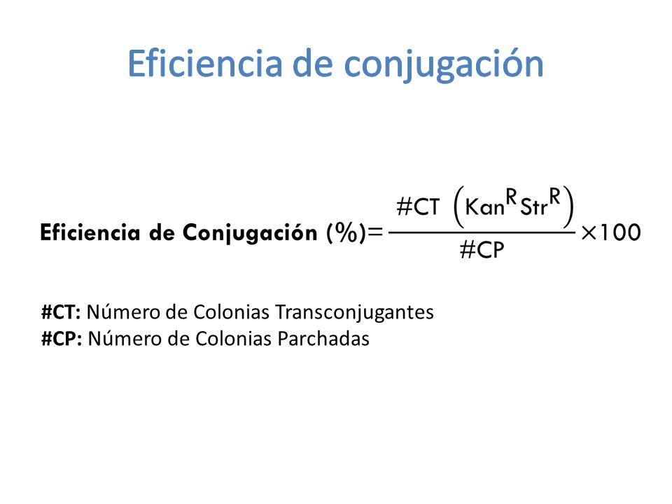 #CT: Número de Colonias Transconjugantes #CP: Número de Colonias Parchadas