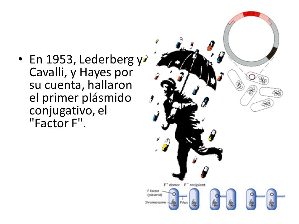 En 1953, Lederberg y Cavalli, y Hayes por su cuenta, hallaron el primer plásmido conjugativo, el