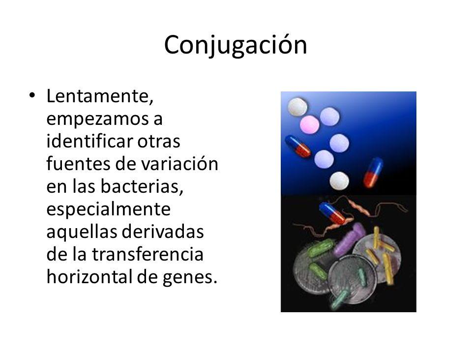 Ejemplo de plásmido