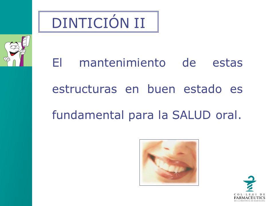 El mantenimiento de estas estructuras en buen estado es fundamental para la SALUD oral. DINTICIÓN II
