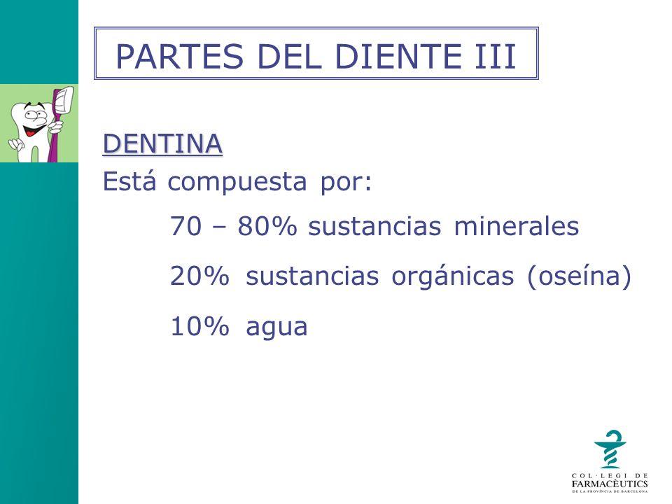 DENTINA Está compuesta por: 70 – 80% sustancias minerales 20% sustancias orgánicas (oseína) 10% agua PARTES DEL DIENTE III
