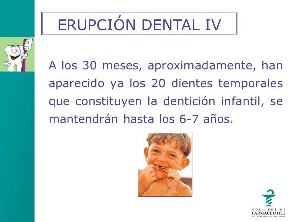 A los 30 meses, aproximadamente, han aparecido ya los 20 dientes temporales que constituyen la dentición infantil, se mantendrán hasta los 6-7 años. E