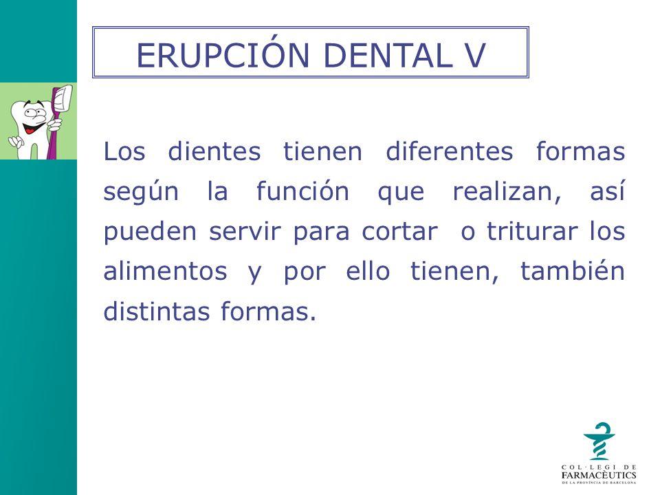 Los dientes tienen diferentes formas según la función que realizan, así pueden servir para cortar o triturar los alimentos y por ello tienen, también