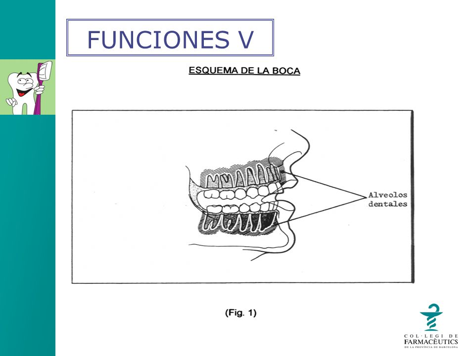 EDULCORANTE, COLORANTE, AROMA Todos ellos tienen como función hacer agradable el uso del dentífrico.