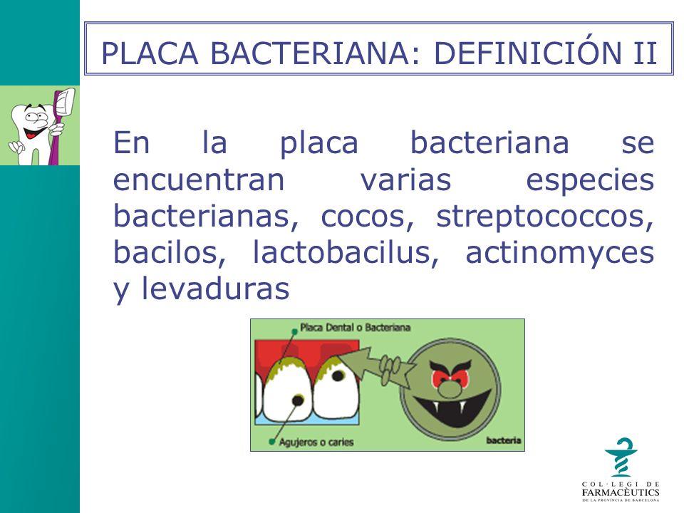 En la placa bacteriana se encuentran varias especies bacterianas, cocos, streptococcos, bacilos, lactobacilus, actinomyces y levaduras PLACA BACTERIAN