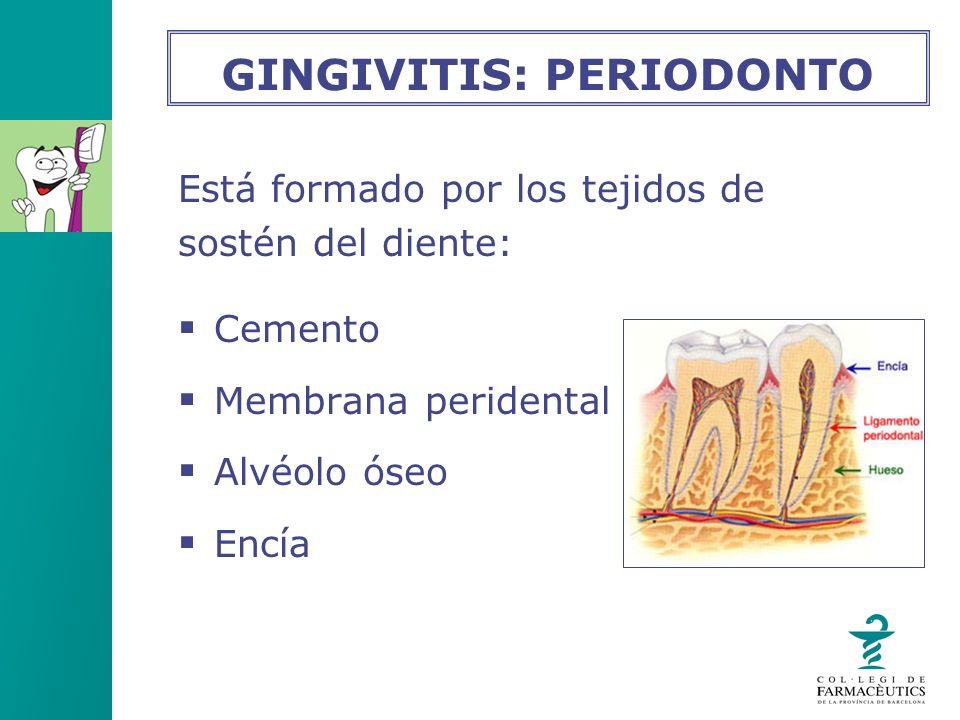 Está formado por los tejidos de sostén del diente: Cemento Membrana peridental Alvéolo óseo Encía GINGIVITIS: PERIODONTO