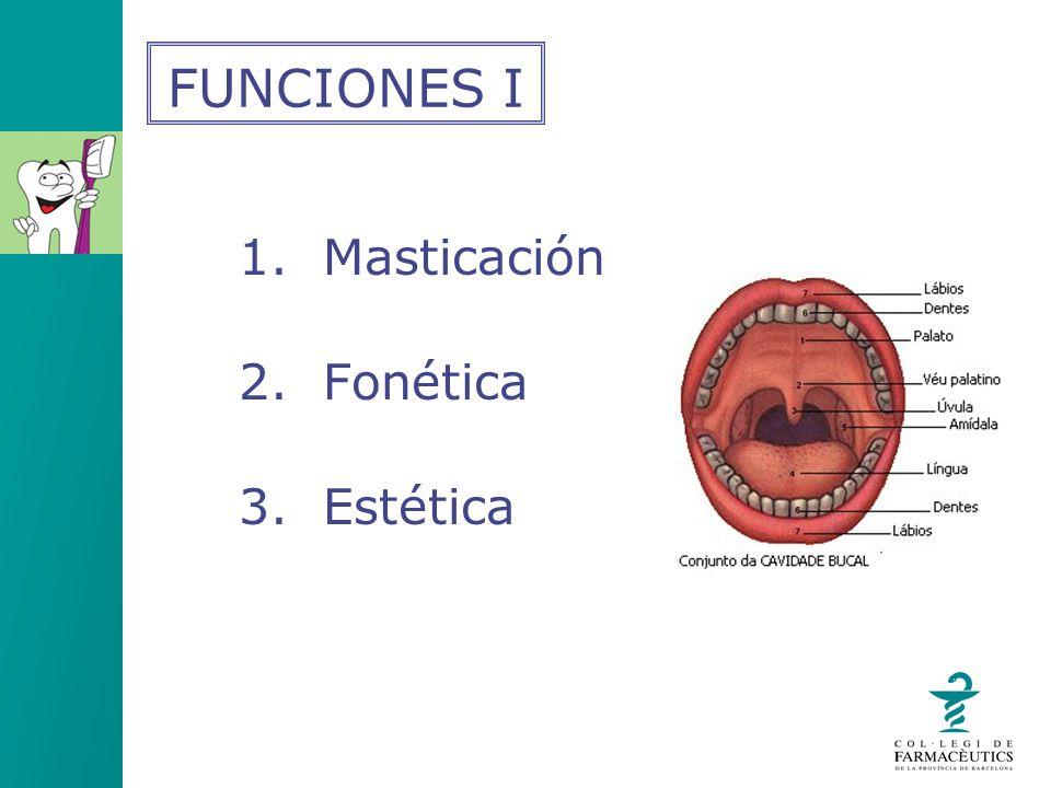 1. Masticación 2. Fonética 3. Estética FUNCIONES I