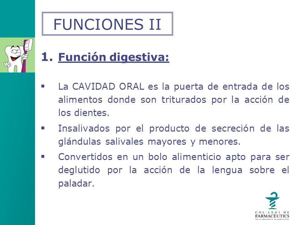 1. Función digestiva: La CAVIDAD ORAL es la puerta de entrada de los alimentos donde son triturados por la acción de los dientes. Insalivados por el p
