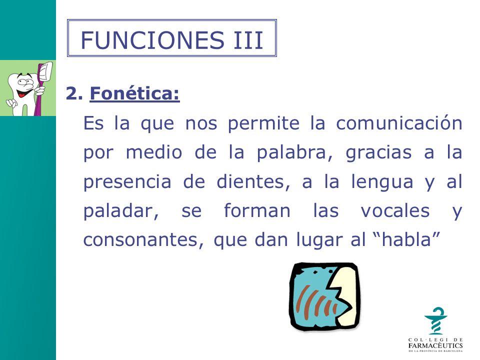 2. Fonética: Es la que nos permite la comunicación por medio de la palabra, gracias a la presencia de dientes, a la lengua y al paladar, se forman las