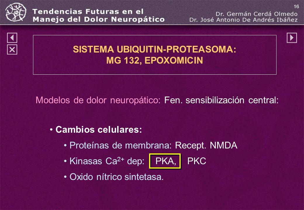 Modelos de dolor neuropático: Fen. sensibilización central: Cambios celulares: Proteínas de membrana: Recept. NMDA Kinasas Ca 2+ dep: PKA, PKC Oxido n