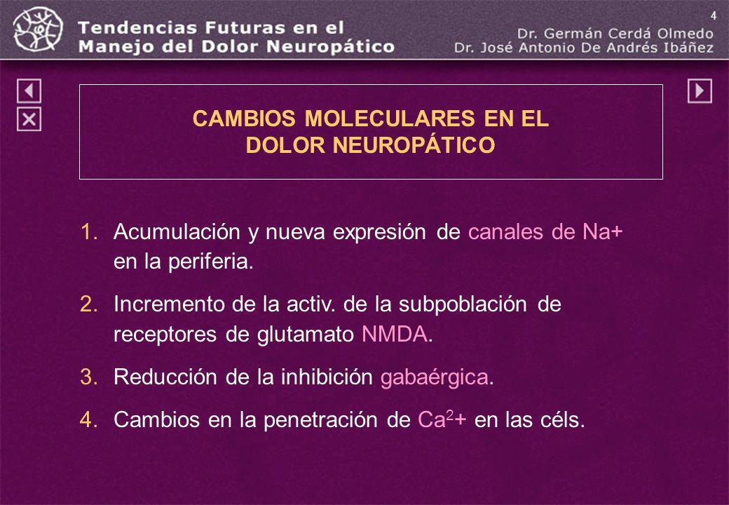 1.Acumulación y nueva expresión de canales de Na+ en la periferia. 2.Incremento de la activ. de la subpoblación de receptores de glutamato NMDA. 3.Red