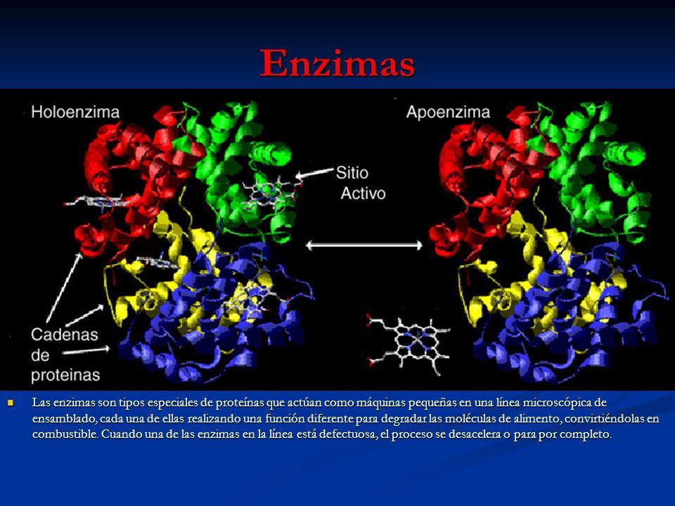 Enzimas Las enzimas son tipos especiales de proteínas que actúan como máquinas pequeñas en una línea microscópica de ensamblado, cada una de ellas rea