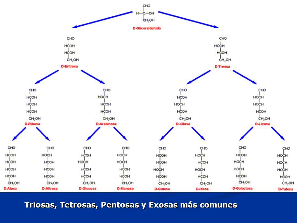 Triosas, Tetrosas, Pentosas y Exosas más comunes