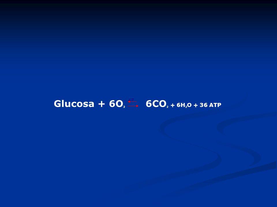 Glucosa + 6O 2 6CO 2 + 6H 2 O + 36 ATP
