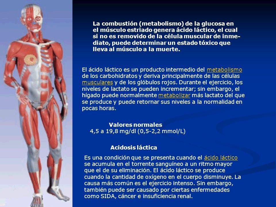 La combustión (metabolismo) de la glucosa en el músculo estriado genera ácido láctico, el cual si no es removido de la célula muscular de inme- diato,
