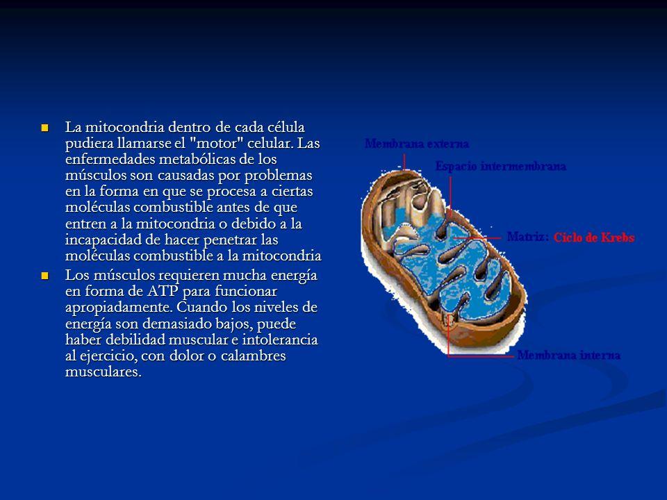 La mitocondria dentro de cada célula pudiera llamarse el