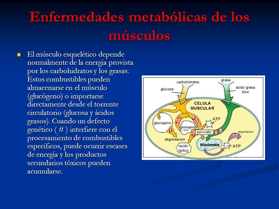 Enfermedades metabólicas de los músculos El músculo esquelético depende normalmente de la energía provista por los carbohidratos y los grasas. Estos c
