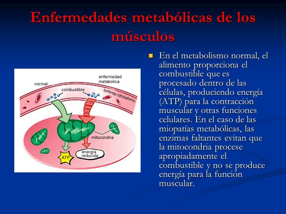 Enfermedades metabólicas de los músculos En el metabolismo normal, el alimento proporciona el combustible que es procesado dentro de las células, prod