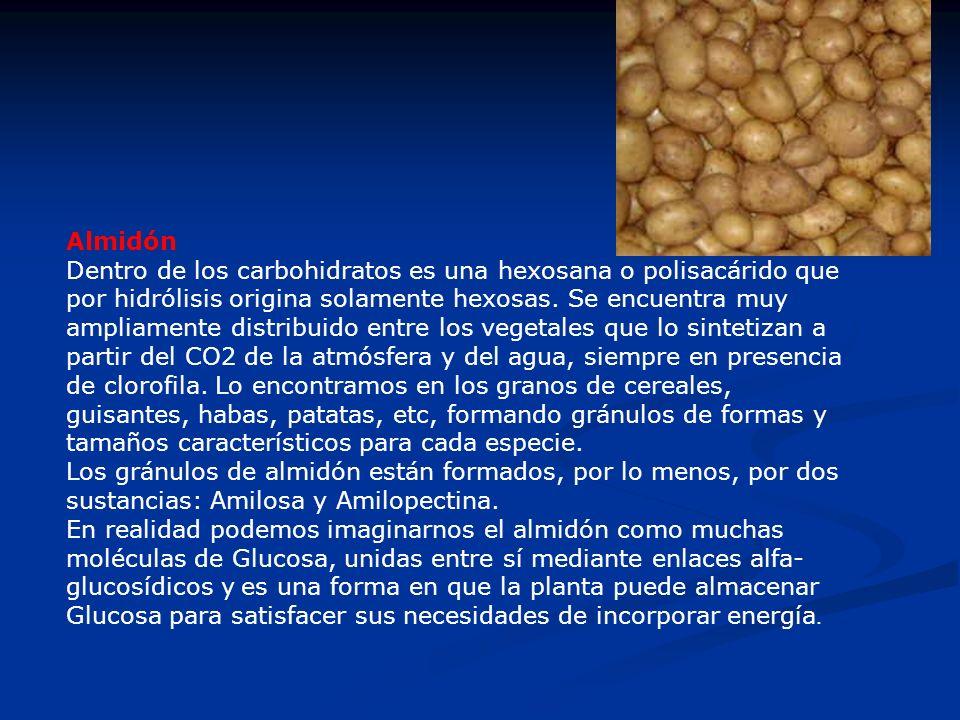 Almidón Dentro de los carbohidratos es una hexosana o polisacárido que por hidrólisis origina solamente hexosas. Se encuentra muy ampliamente distribu
