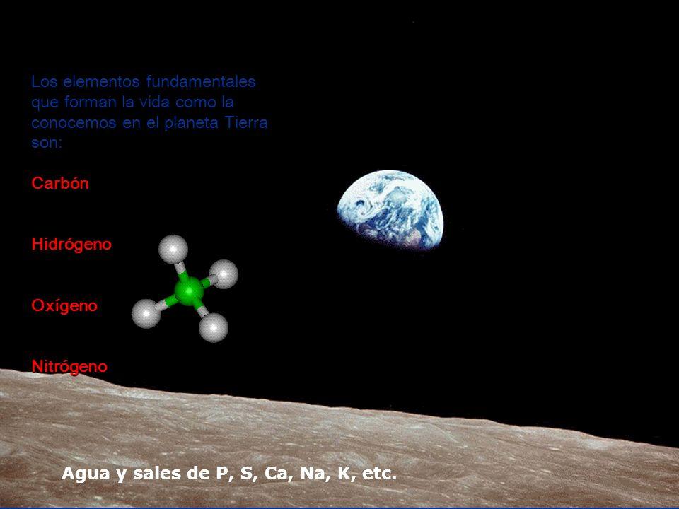 Los elementos fundamentales que forman la vida como la conocemos en el planeta Tierra son:CarbónHidrógenoOxígenoNitrógeno Agua y sales de P, S, Ca, Na