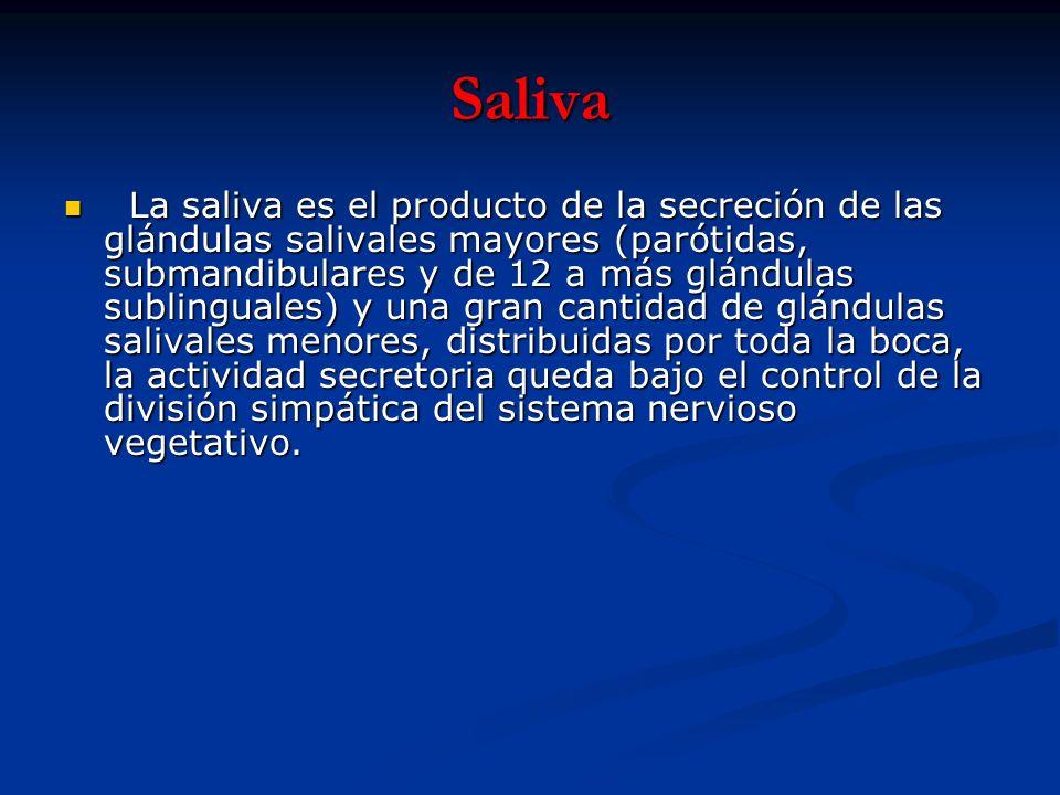 Saliva La saliva es el producto de la secreción de las glándulas salivales mayores (parótidas, submandibulares y de 12 a más glándulas sublinguales) y