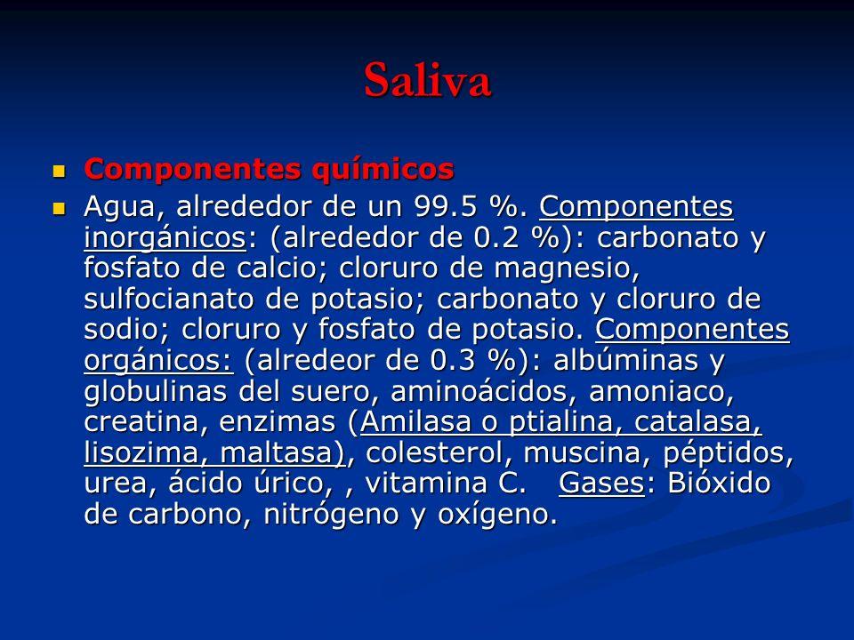 Saliva Componentes químicos Componentes químicos Agua, alrededor de un 99.5 %. Componentes inorgánicos: (alrededor de 0.2 %): carbonato y fosfato de c