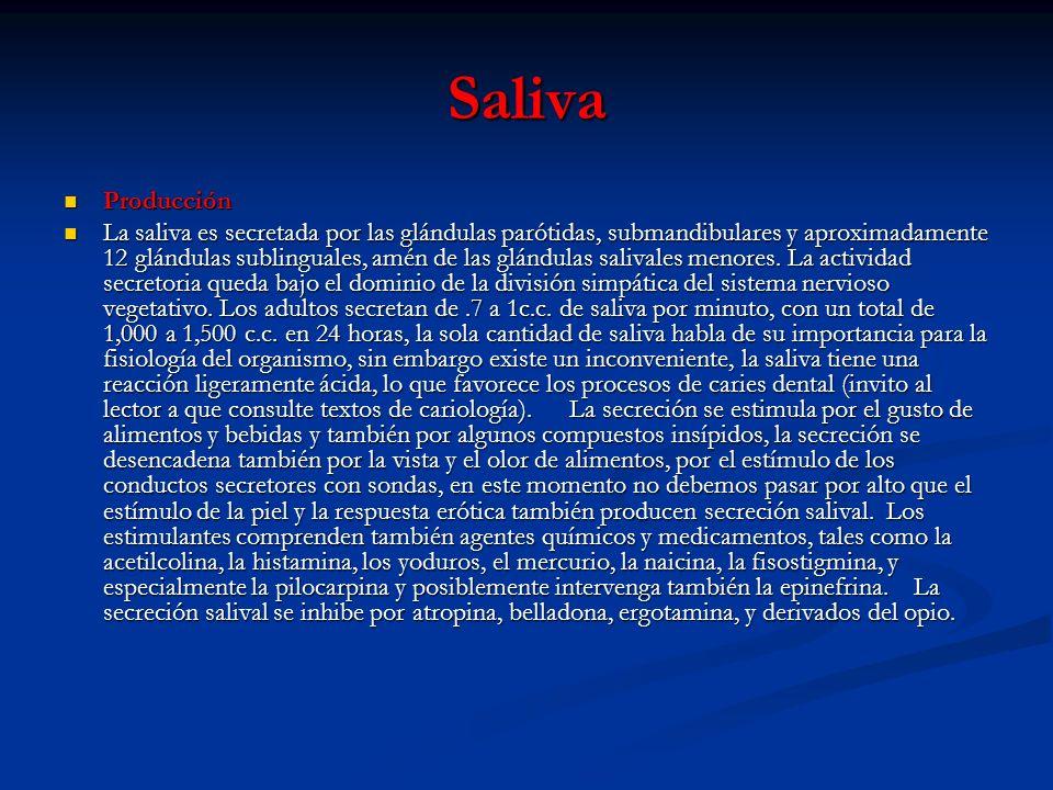 Saliva Producción Producción La saliva es secretada por las glándulas parótidas, submandibulares y aproximadamente 12 glándulas sublinguales, amén de