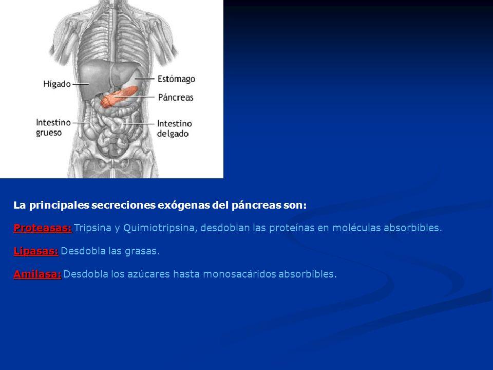 La principales secreciones exógenas del páncreas son: Proteasas: Proteasas: Tripsina y Quimiotripsina, desdoblan las proteínas en moléculas absorbible