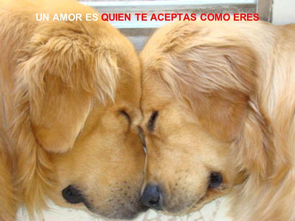 ES UN AMOR info@universoanimal.com